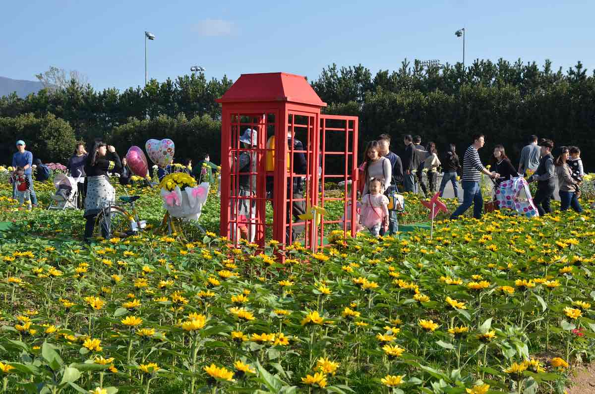 Geoje Island Flower Festival Oct. 26-Nov. 3