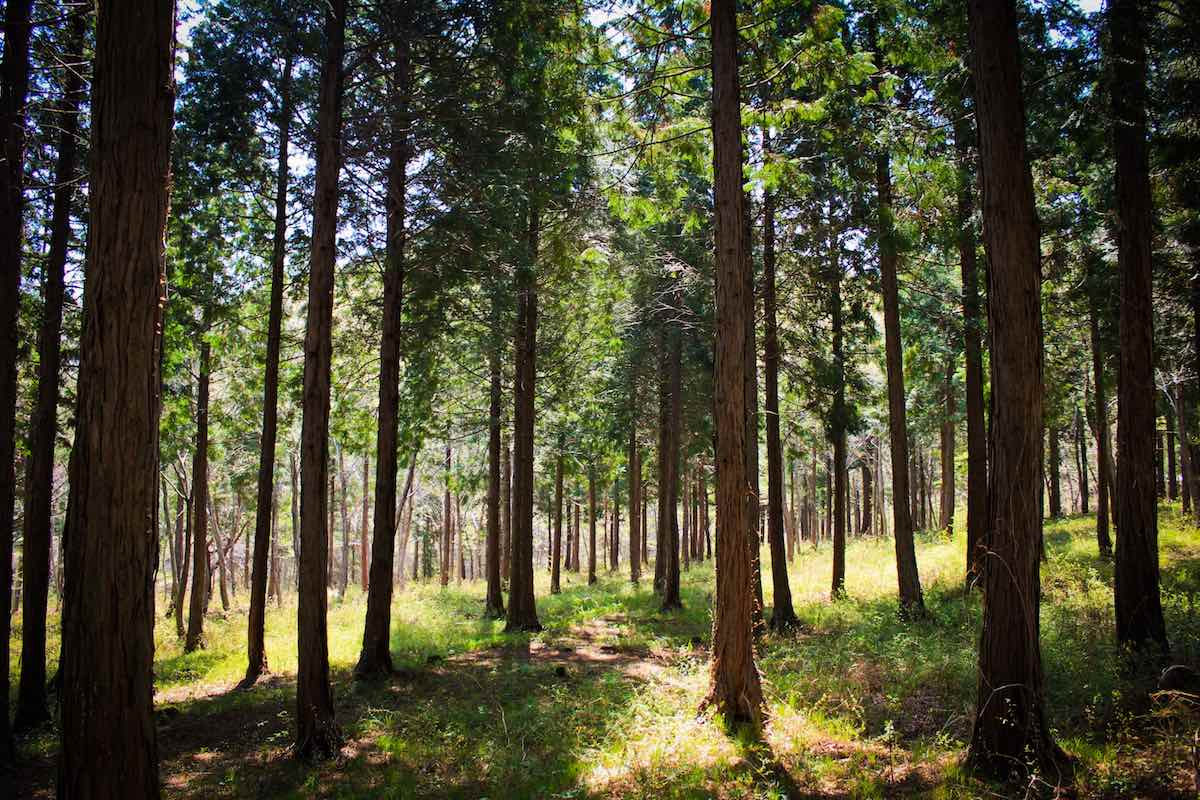 Namhae Pyeonbaek Recreational Forest offers outstanding natural scenery