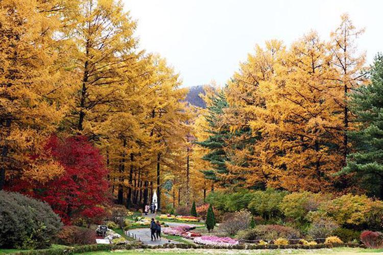 Image: The Garden of Morning Calm website