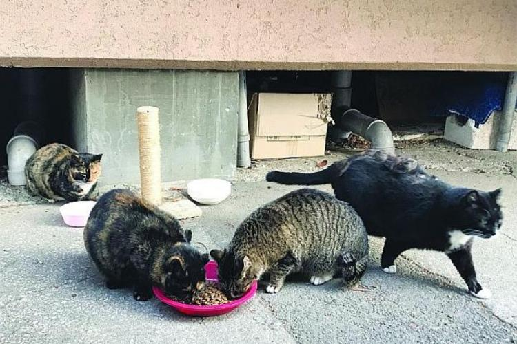 Officials at Yongsan Garrison in Seoul, South Korea, have estimated that the Army installation has about 70 stray cats, and they want to contain the problem before that number multiplies in the spring. KIM GAMEL/STARS AND STRIPES
