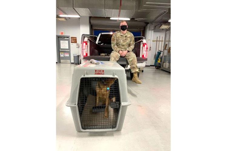 TSgt. Frank Padeway, 51st Force Support Squadron, transported pets to local animal shelter Homeward Bound Osan after a Patriot Express mission carrying 58 passengers and seven pets diverted to Osan Air Base on Aug. 18, 2021. The shelter fed and cared for the pets while the passengers were on the ground.