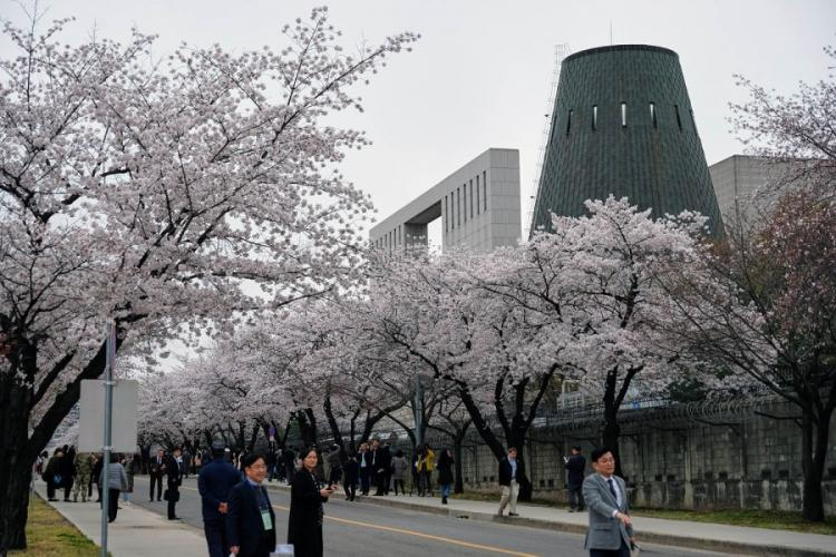 South Koreans take time to appreciate the cherry blossoms during a tour inside Yongsan Garrison, South Korea, on Tuesday, April 9. 2019. MATT KEELER/STARS AND STRIPES