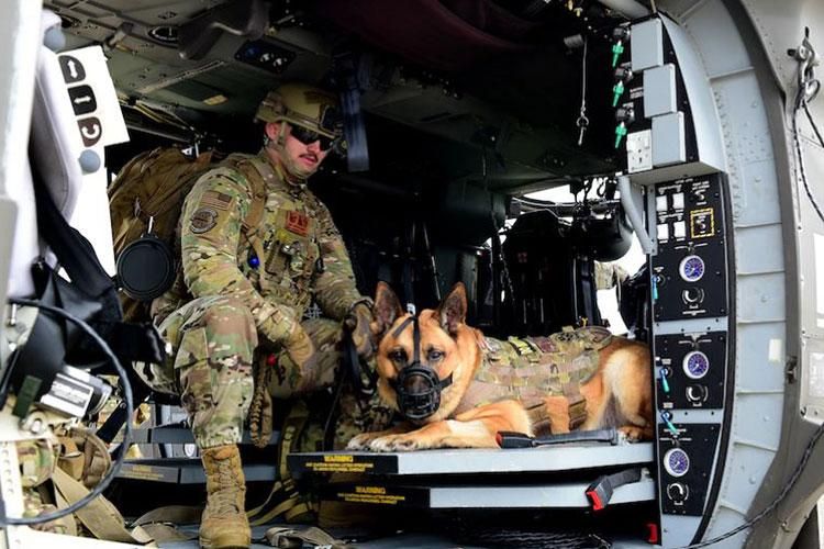 Senior Airman Austin West, 8th Security Forces Squadron military working dog handler, and MWD Bonus, sit inside a U.S. Army HH-60M Black Hawk helicopter for familiarization training during a joint medevac training event at Kunsan Air Base, Republic of Korea, April 13, 2021. The handlers gradually exposed the MWDs to the helicopters to familiarize them with the noises and vibrations to reduce their anxiety while flying. (U.S. Air Force photo by Senior Airman Suzie Plotnikov)