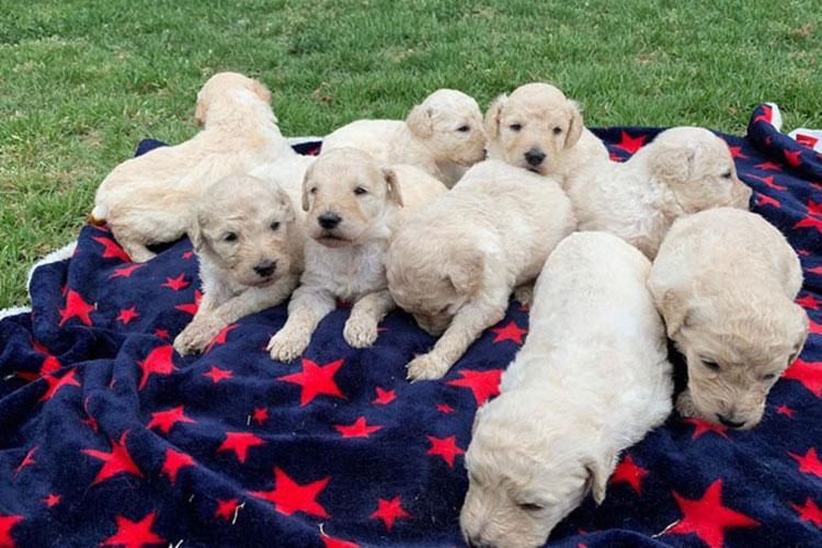 Photo courtesy of Korea Assistant Dog Association