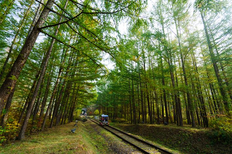 Passing through autumn scenery on Jeongseon Railbike