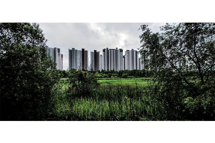 Sky-rise buildings framed by the wetlands of Baedari Eco Park (photo by Kyle Haney)