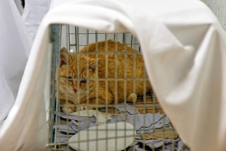 https://www.stripes.com/news/pacific/feral-cats-undergo-mass-sterilization-surgery-to-control-population-at-yongsan-1.579154