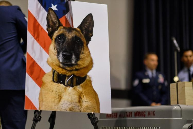 An official photo of military working dog Ooyvey of the 8th Security Forces Squadron is displayed at a memorial ceremony on Kunsan Air Base, South Korea, Wednesday, June 19, 2019. MATTHEW KEELER/STARS AND STRIPES