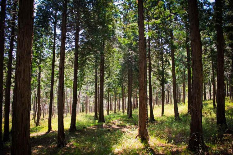 Image: Korea Forest Service